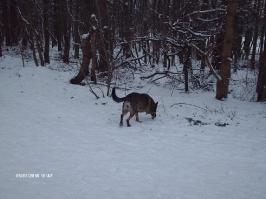 Schnee 2010